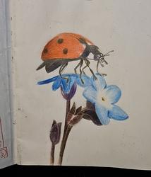 Ladybug%20drawing